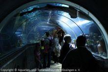 20-Tunnel