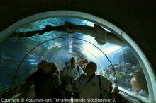 21-Tunnel_Ammenhai