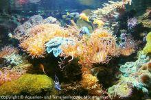 16-Korallenaquarium