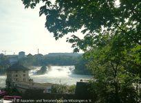 1_Rheinfall_02