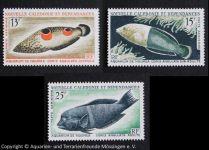 34_Coris_aygula_(Spiegelfleck-Lippfisch)_auf_Briefmarken