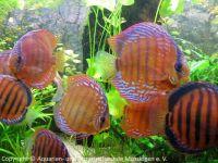 Aquarium_Kunzmann_00
