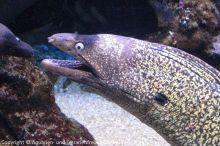 Aquarium-Palma_01