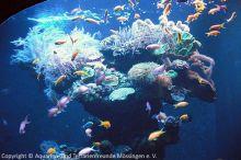 Aquarium-Palma_06
