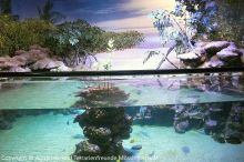 Aquarium-Palma_08
