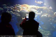 Aquarium-Palma_00
