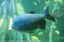 Aquarium-Palma_12
