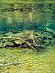 Unterwasserwelten_12