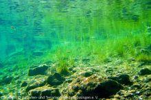 Unterwasserwelten_08