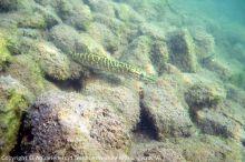 Unterwasserwelten_00