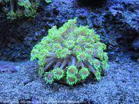 Korallen_0