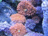 Korallen_2