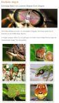 11_Insektenaugen_(Bilder_von_Ernst_Wagner_auf_der_Vereins-Homepage)