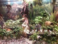 10_Aquarium_von_Joachim